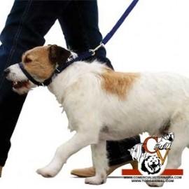 Canny collar perros